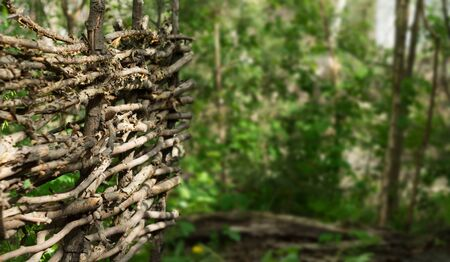 intertwined: Rustic fence of interwoven twigs