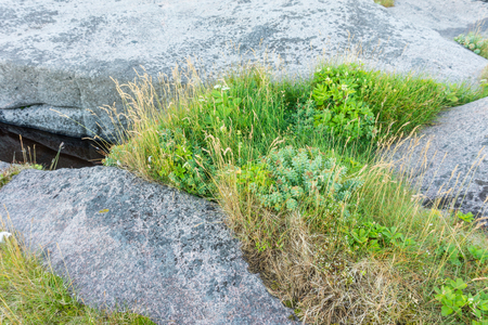 Rocky terrain and vegetation on the island of Mageroya, Norway