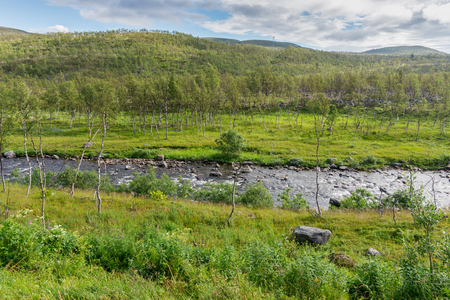 The characteristic landscape of the Arctic tundra. Low trees, shrubs, grass, northern Norway 写真素材 - 97064008
