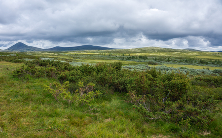Vegetation of the tundra in the mountains of Norway. Surroundings national tourist route Rondane