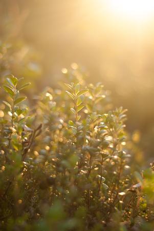 Green plants illuminated by bright sun on sunset Stock Photo