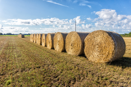Round bales of straw on a field Stock Photo