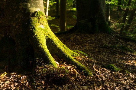 The root of a large tree overgrown with moss