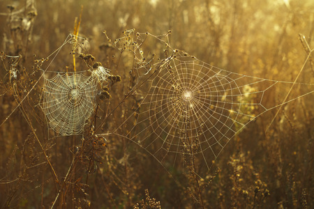Dry grass and cobweb in dew drops on a blurred background