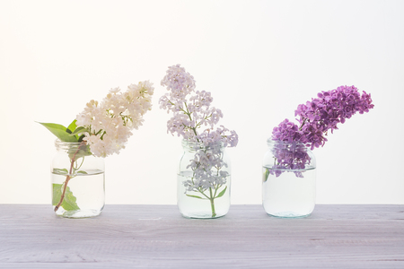 Branches of blooming multicolored lilac in glass jars on white wooden table Banque d'images
