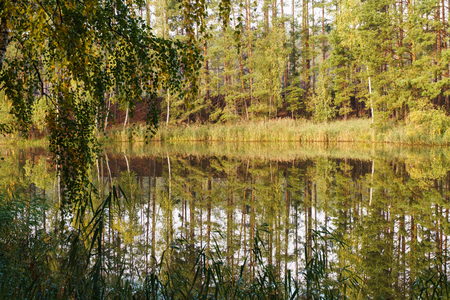 Green trees reflected in the calm water of a forest lake Фото со стока