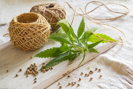 Hemp products concept. Cannabis seeds, coils of rope and green plant on homespun cloth
