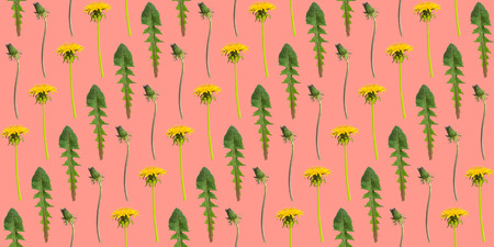 Diagonal rows of dandelion flowers and leaves on a coral background. Seamless pattern