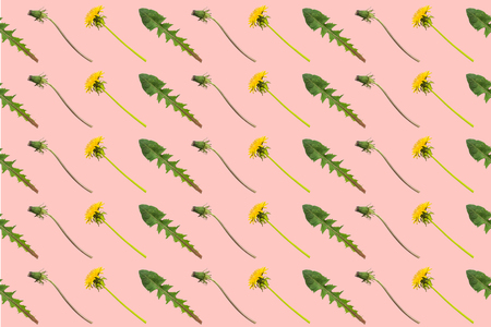 Diagonal rows of dandelion flowers, buds and leaves on a pink background. Seamless pattern