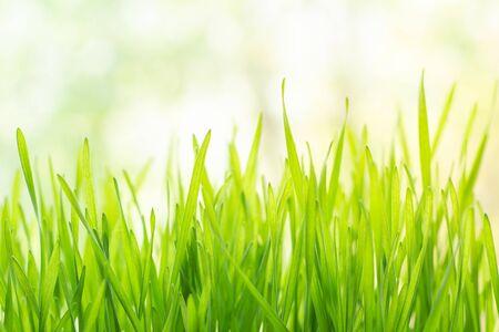 Fresh green grass in bright sunshine 免版税图像