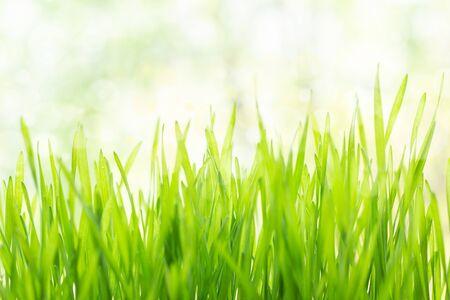 Hierba verde fresca bajo un sol brillante