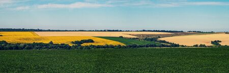 Agriculture. Farm fields of sunflowers, wheat and soy. Panorama