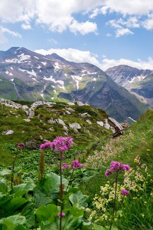 Blooming alpine meadow against mountains with snow patches. Austrian Alps