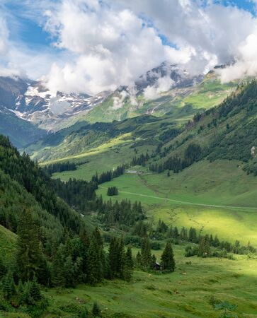 Scenic landscape with green meadows, high fir trees and snow-covered mountains in clouds, Austrian Alps