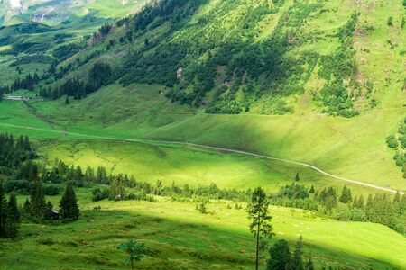 Alpine valley with frash green grass and grazing cows in the distance, Austria