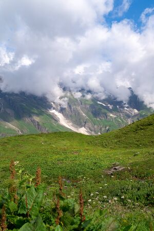 Blooming alpine meadow on a background of mountains in the clouds. Austrian Alps