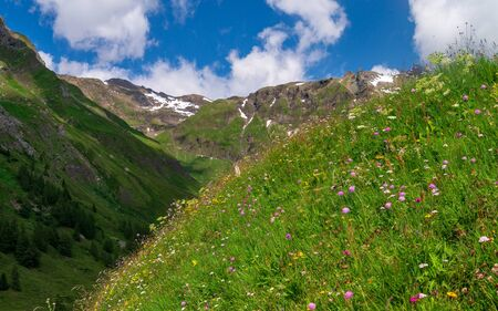 Flowering alpine meadow against mountains with snow patches. Austrian Alps Zdjęcie Seryjne
