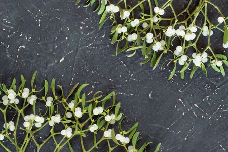 Frame of mistletoe branch with green leaves and white berries on a gray textured background Stock Photo