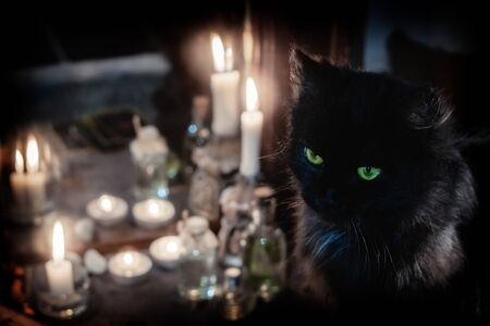 Magic concept. Black cat and burning candles near the old mirror