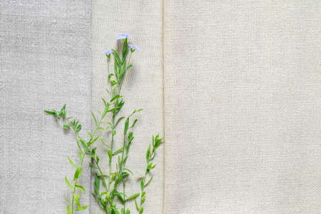Texture of old and modern linen fabric and flowering flax plants