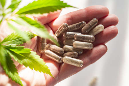 Agronomist or pharmacist holds a hemp plant and medical capsules with medicine or dietary supplements in his hand