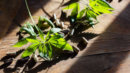Cannabis plant and medical capsules with or dietary supplements on wooden table Archivio Fotografico
