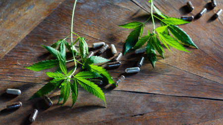 Cannabis plant and medical capsules with medicine or dietary supplements on wooden table