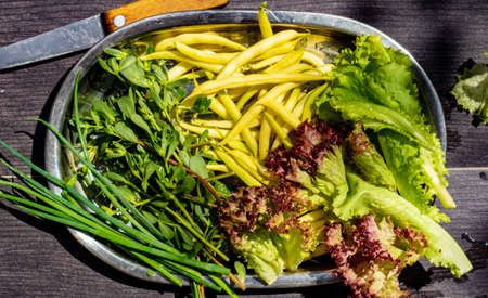 Green beans, lettuce and purslane on a metal tray Archivio Fotografico