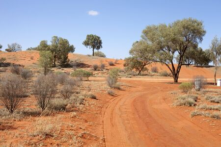 red sandy road in desert between lonly trees Stock Photo