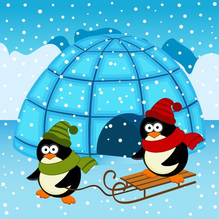 Pinguin Iglu