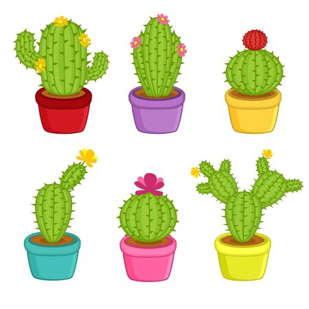 dry flowers: set of cacti in pots