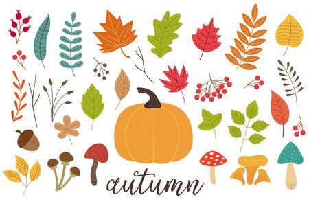 Set of autumn plants Illustration