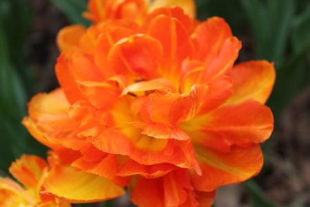 fire flower: Fire Flower