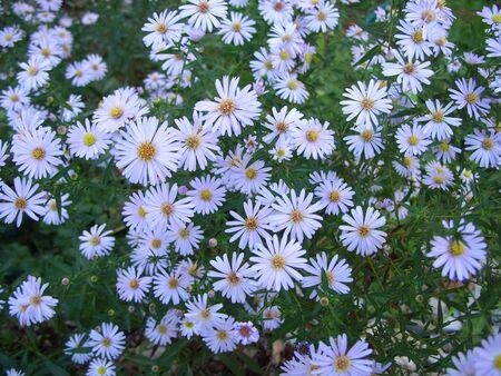 small flowers Zdjęcie Seryjne - 128906351