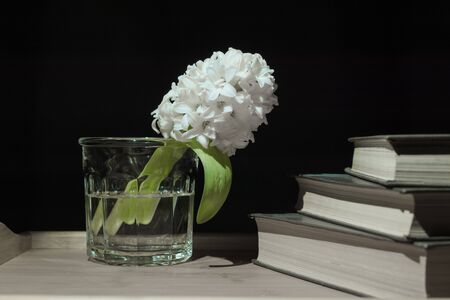 hyacinth flower in a glass glass with water and a stack of books on a dark background