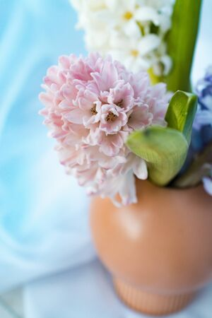 Bouquet of hyacinths close-up standing in a vase on a pastel background 版權商用圖片
