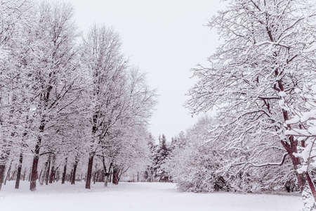 Snow-covered trees in the Park. Trees in snowy winter.A lot of snow in the Park. Cold winter Фото со стока
