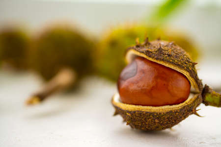do not reveal the fruit of the horse chestnut on the green background