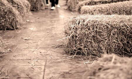 Piled hay bales image after agriculture harvest season with vintage brown color abstract pattern used to receive people sitting in a rural street festival