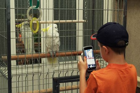 A small reporter looks at a picture of a large white parrot on his smartphone. little boy in a red T-shirt black and dark baseball cap Stockfoto
