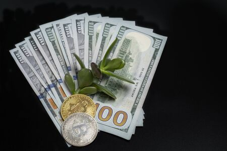 Us dollars on a black background, bitcoins and money tree.