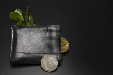 Male black wallet with bitcoin money tree.