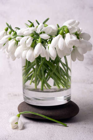 The first spring flowers are white snowdrops in a glass jar Фото со стока