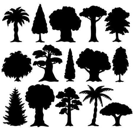 cypress tree: Black silhouette various of trees on a white background  Illustration
