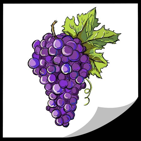 Grapes icon isolated - vector Vector