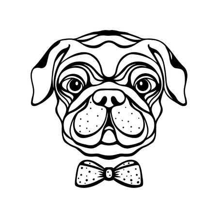 pug puppy: Dog with a bow isolated in black and white - vector