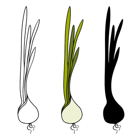 haulm: Set sketch onions isolated - vector