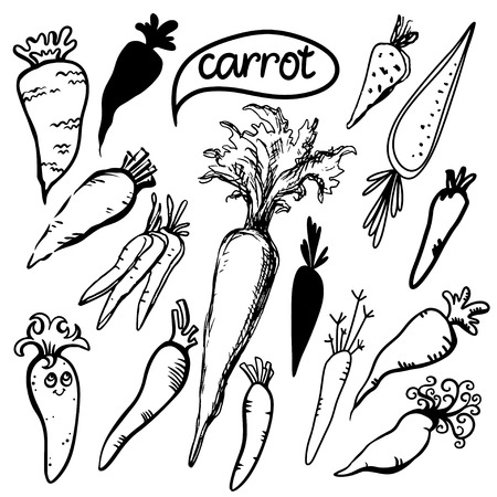 carrots isolated: Set sketch carrots isolated - vector