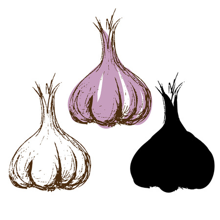 Set sketch garlic - vector Vector