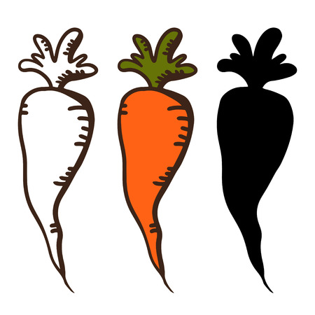 haulm: Set sketch carrots isolated - vector